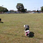 Dog Park 5